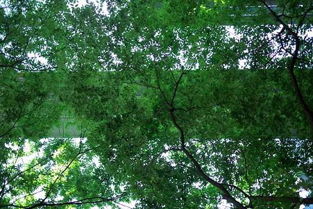 2010.08.29 有楽町 東京国際ホーラム 渡り廊下