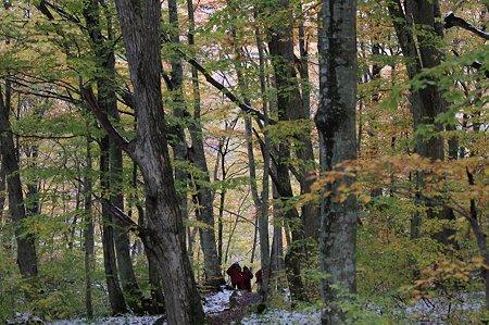 2010.10.28 蔦温泉 蔦野鳥の森