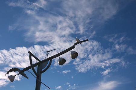 2010.10.29 気仙沼漁港 街灯にウミネコ