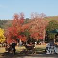 奈良ならでわの・・・3