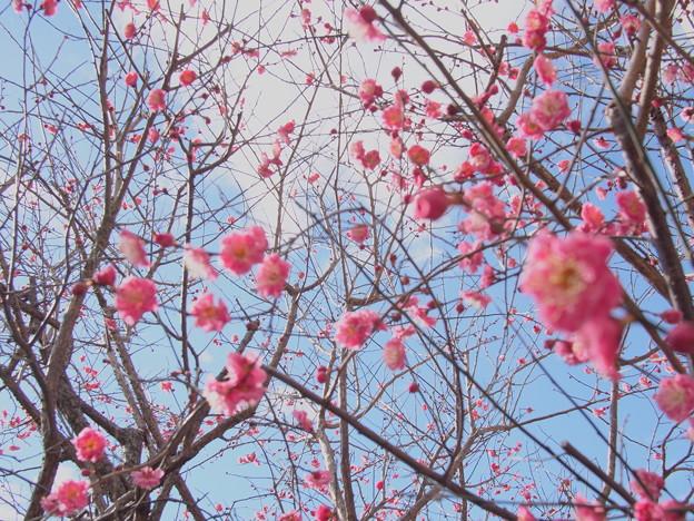 Invitation ~春へのいざない~
