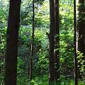 2012円山公園0016