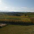 美瑛の丘1
