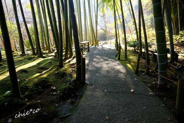 竹林の径・・