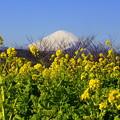 写真: 吾妻山公園-129