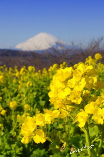 吾妻山公園-130