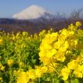 写真: 吾妻山公園-130
