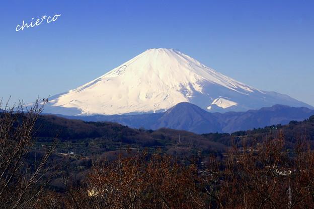 写真: 吾妻山公園-138