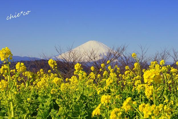 吾妻山公園-143