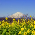 写真: 吾妻山公園-143
