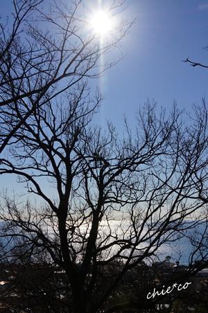 吾妻山公園-157