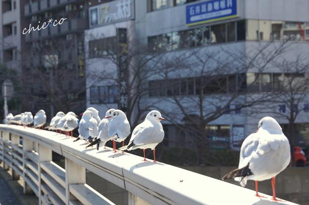 関内~野毛~吉田町さんぽ-121