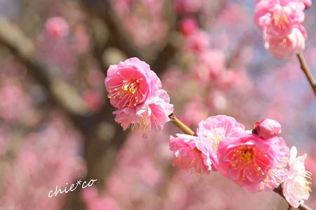 金沢自然公園-222
