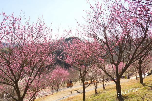 金沢自然公園-226
