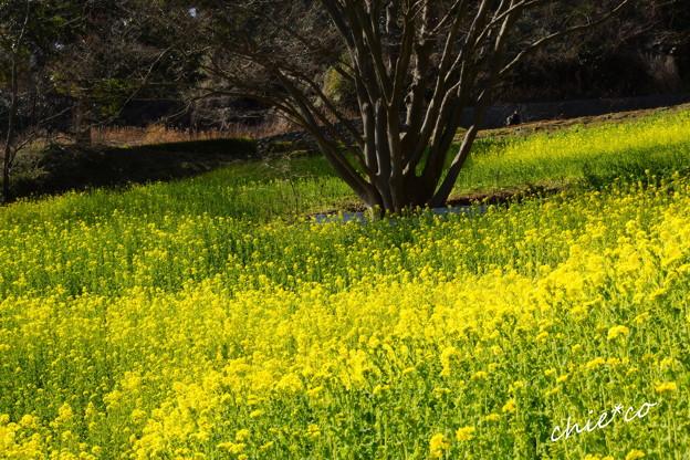 写真: 金沢自然公園-273