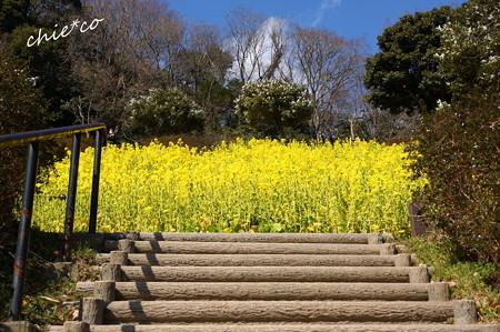 金沢自然公園-275