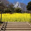 写真: 金沢自然公園-275