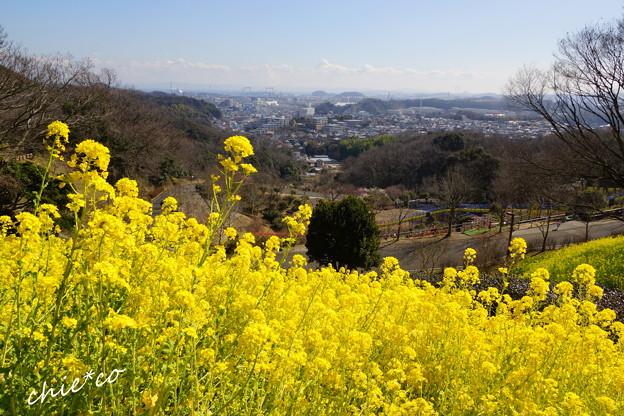 金沢自然公園-279