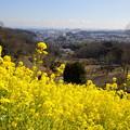 写真: 金沢自然公園-279