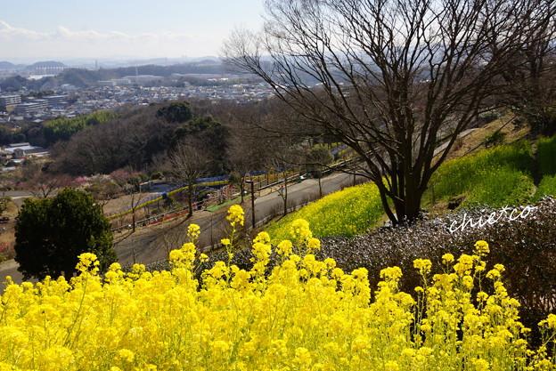 金沢自然公園-280