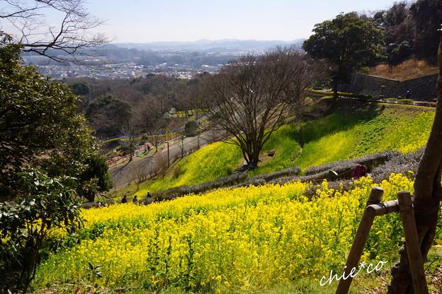 写真: 金沢自然公園-281
