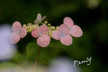 瀬戸の月・・pink