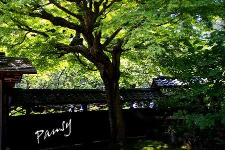 樹木の作る空間・・風待月の東慶寺