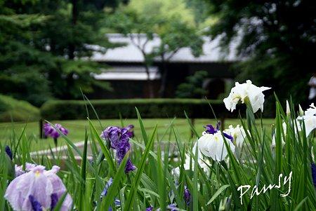 明月院 後庭園にて・・7