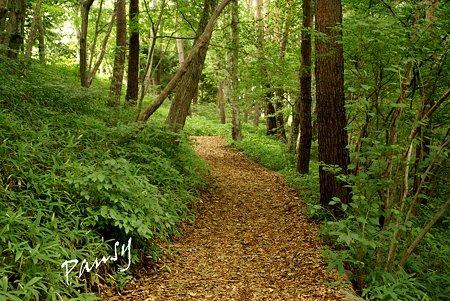 森の道・・