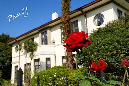 白い洋館と赤い薔薇・・ 10月の港の見える丘公園・・6