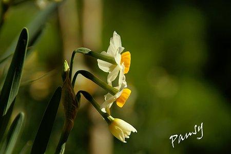 春の香り・・