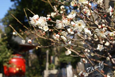 梅の向こうの宝塔・・池上さんぽ~28