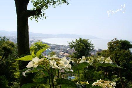 海と・・紫陽花のある風景・・水無月の長谷寺・・12