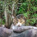 Photos: 野良猫・・・。
