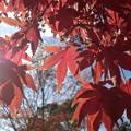 公園の紅葉?