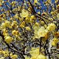 Photos: 春を演じる
