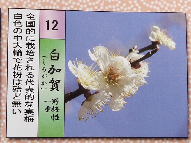 2015_0221花小金井白加賀011