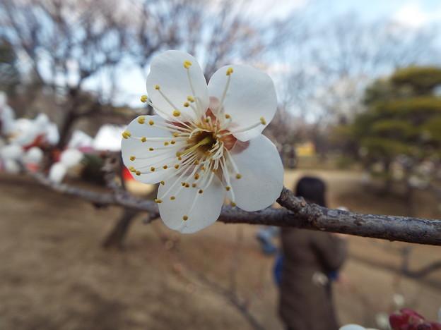 2015_0221花小金井白加賀0119