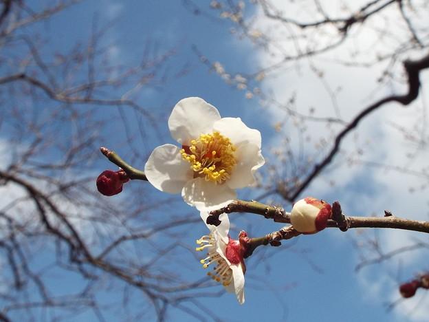 2015_0221花小金井白加賀0074