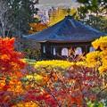 Photos: 銀閣寺