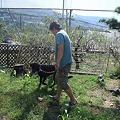Photos: お父さんと庭散策