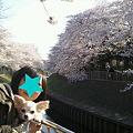 Photos: 娘さんとのお花見