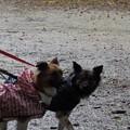 Photos: 犬が居れば、すぐにルンルンに♪