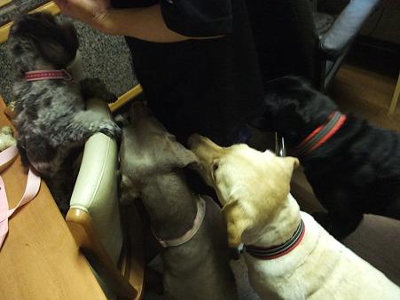 ササミに群がる犬軍団
