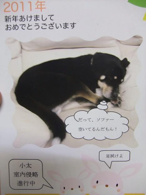 Photos: こたろう近況