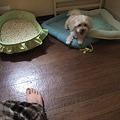 Photos: ベッドに戻り、また足へ・・・