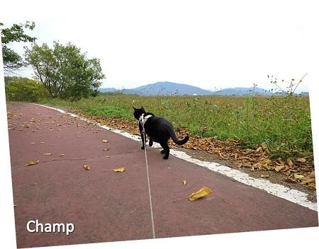 チャンプの散歩5