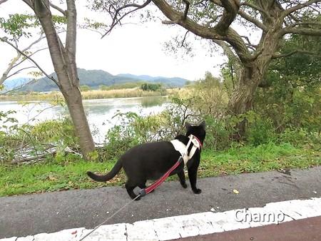 チャンプの散歩9