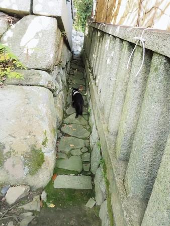 お散歩は神社25