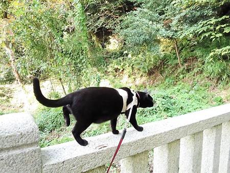 お散歩は神社29